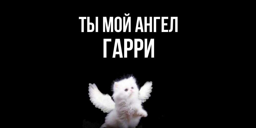 Открытка на каждый день с именем, Гарри Ты мой ангел Кот ангел Прикольная открытка с пожеланием онлайн скачать бесплатно