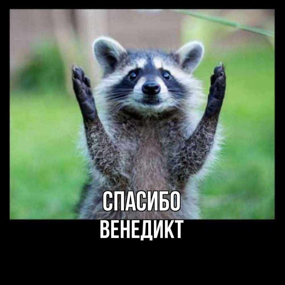 Открытка на каждый день с именем, Венедикт Спасибо милые животные Прикольная открытка с пожеланием онлайн скачать бесплатно