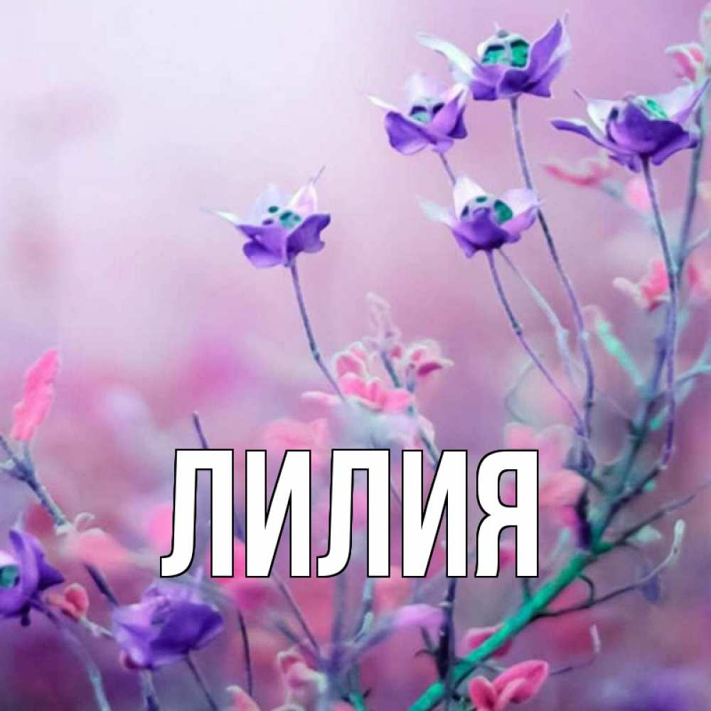Открытки лилия именем