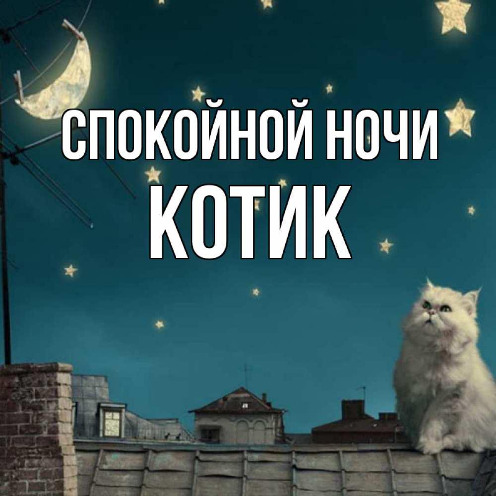 Фото кота с подписью спокойной ночи