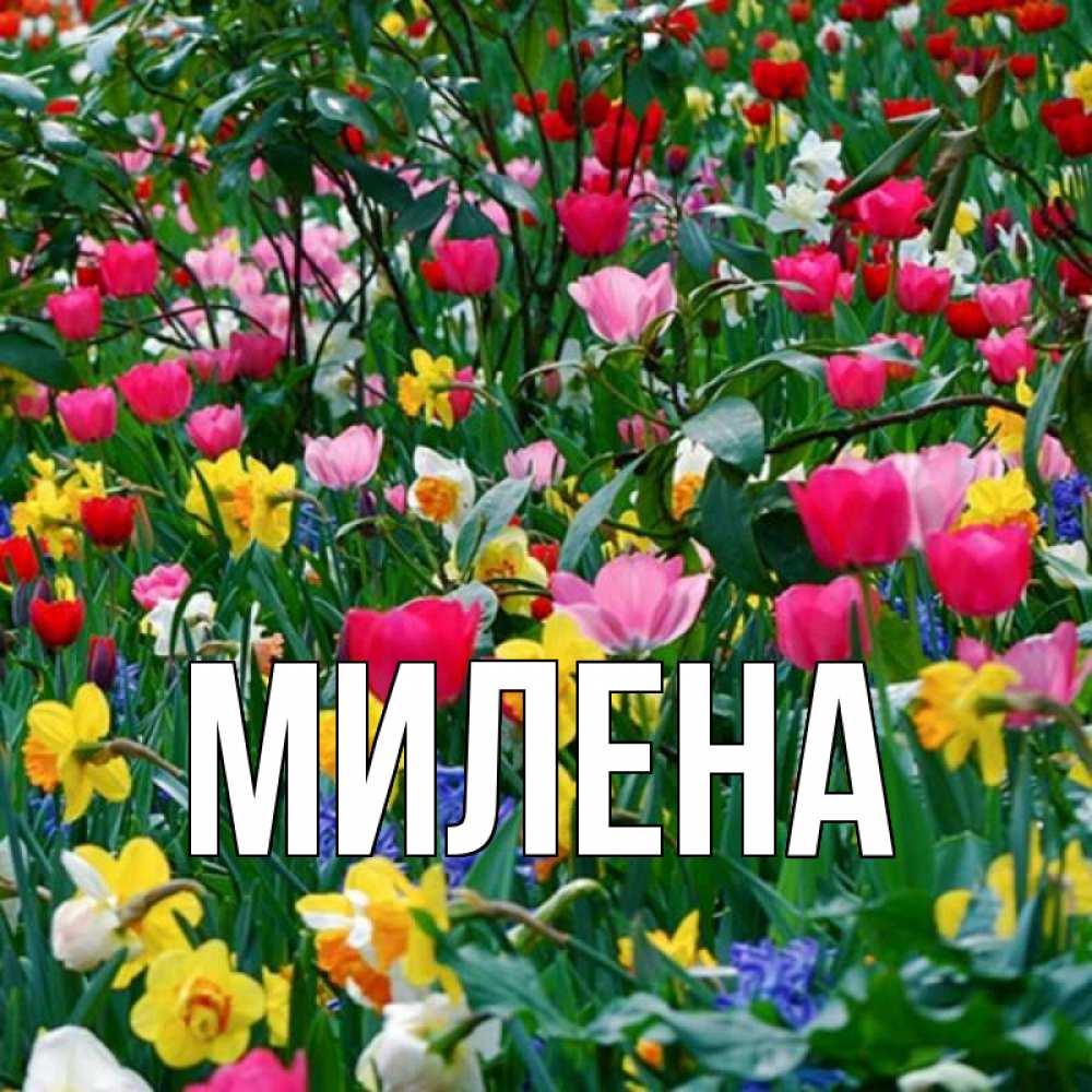 стихи с именем милена на 8 марта мини-отели