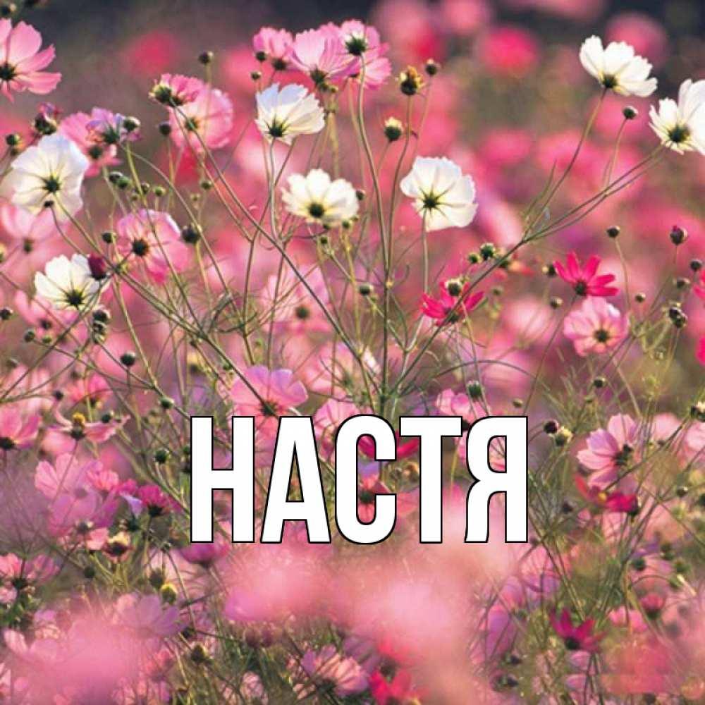 Красивое счастье по имени настя картинка