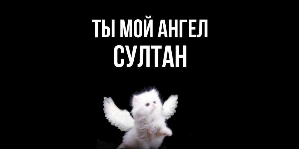 Открытка на каждый день с именем, Султан Ты мой ангел Кот ангел Прикольная открытка с пожеланием онлайн скачать бесплатно