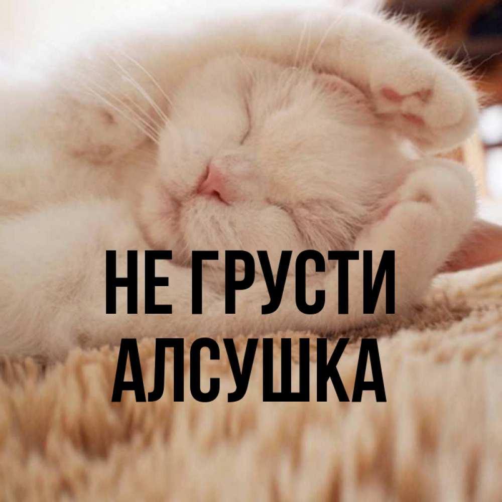 Открытка на каждый день с именем, Алсушка Не грусти Котенок спит Прикольная открытка с пожеланием онлайн скачать бесплатно