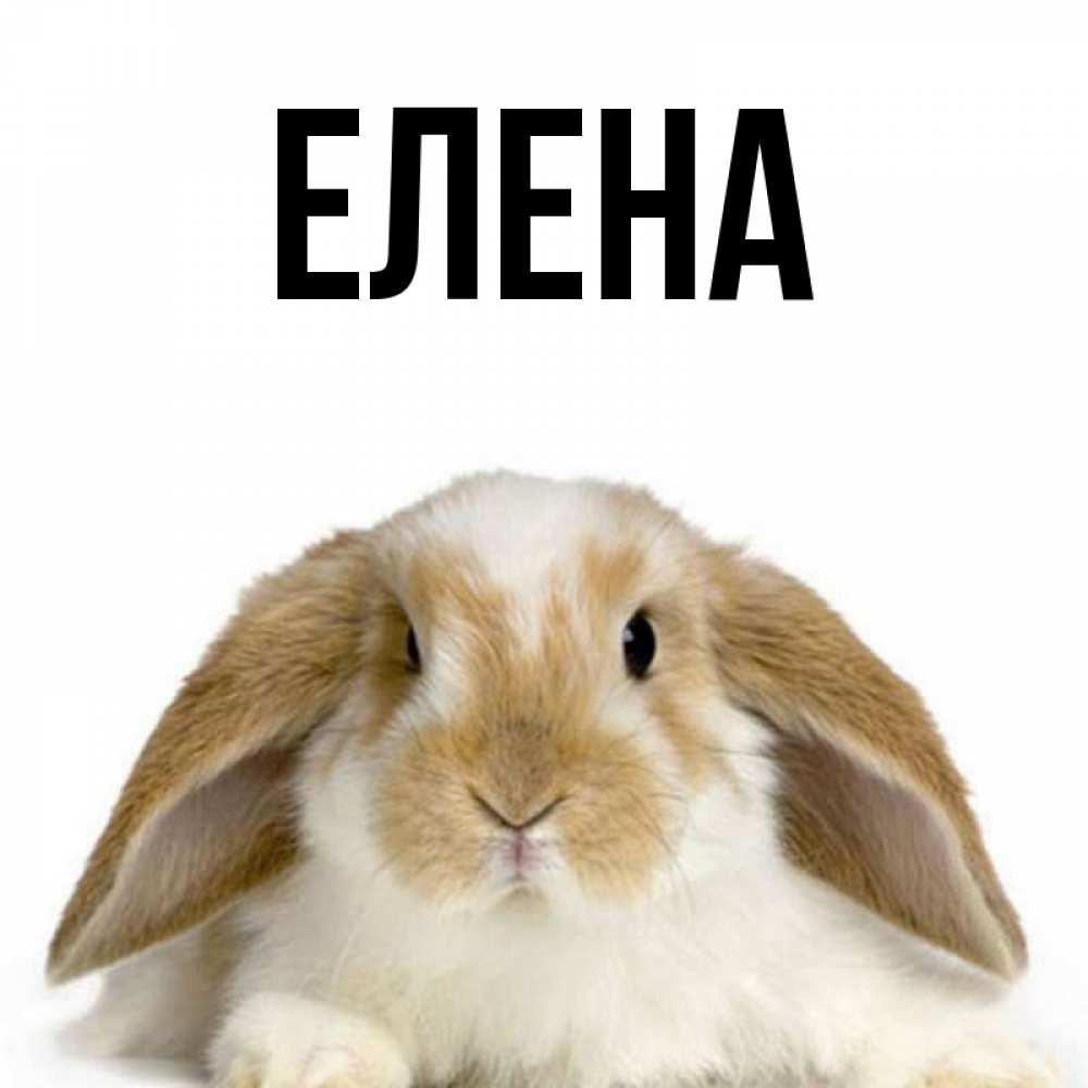 Поздравления, картинка с именем елена 43