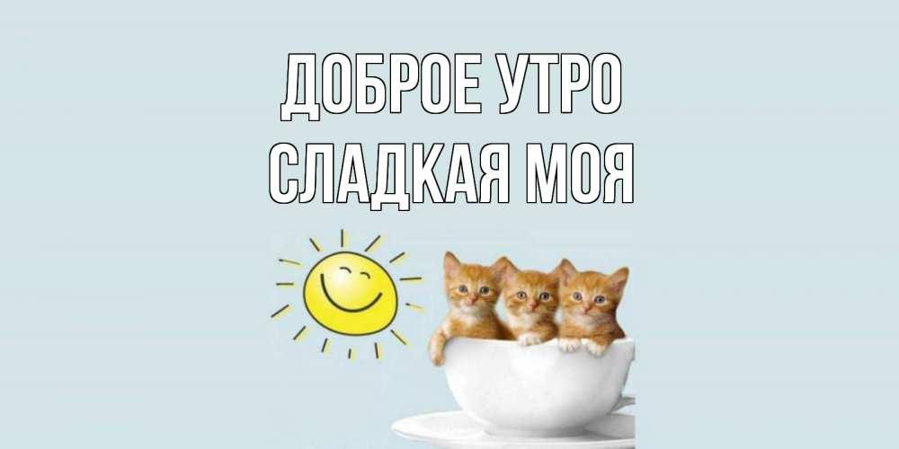 Картинки доброе утро мой сладкий котенок, поздравления