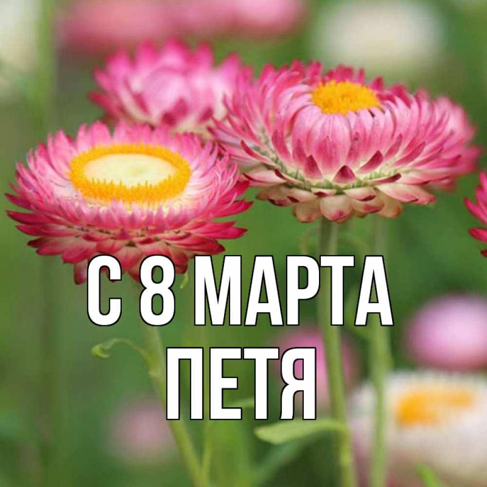 Открытка на каждый день с именем, Петя C 8 МАРТА подарок на международный женский день Прикольная открытка с пожеланием онлайн скачать бесплатно