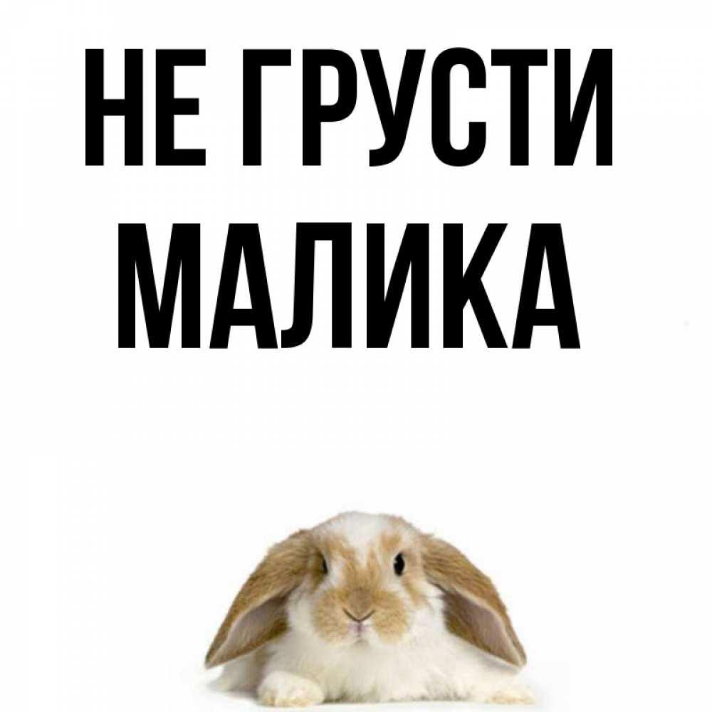 Поздравления, картинки мишки с надписью не грусти