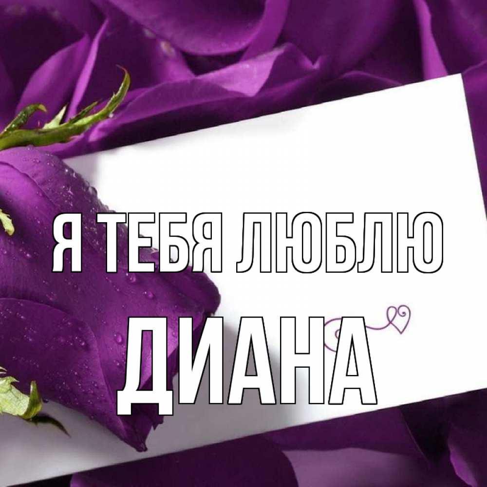 Фото роз диана я тебя люблю