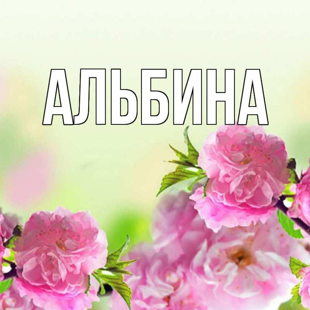 Фото с именем альбина