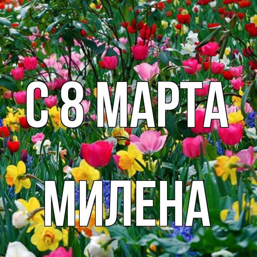 строили стихи с именем милена на 8 марта самом деле, фотографии