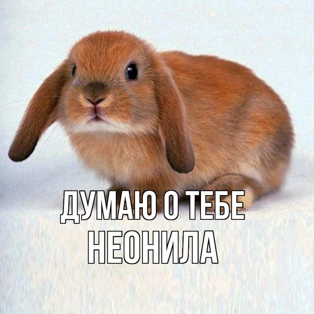 Открытка на каждый день с именем, Неонила Думаю о тебе кроль коричневый Прикольная открытка с пожеланием онлайн скачать бесплатно