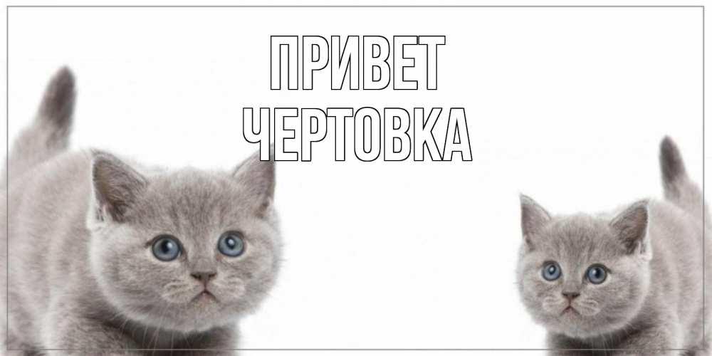 Открытки привет брат, картинки животных