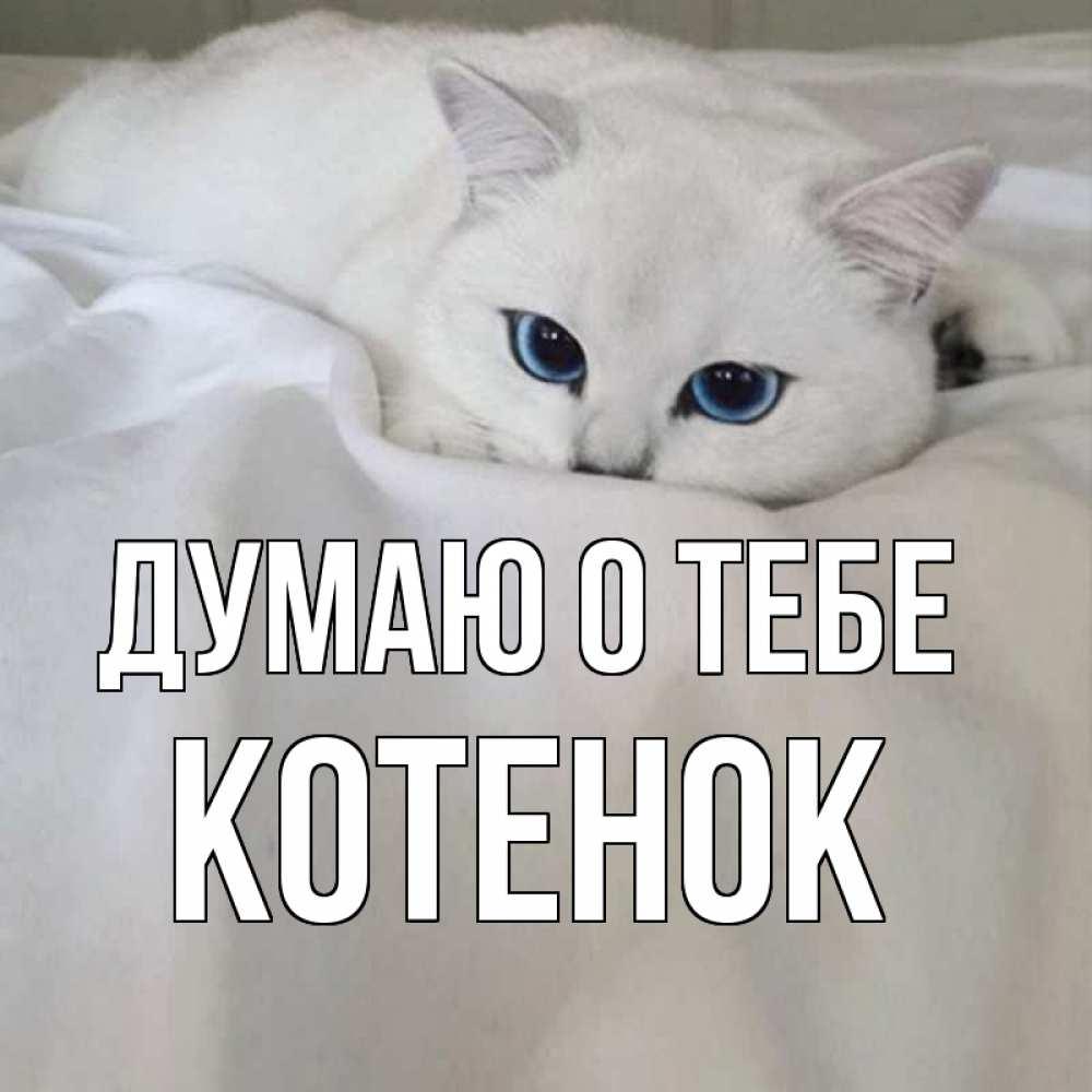 имеет открытка думаю о тебе котенок кино уже много