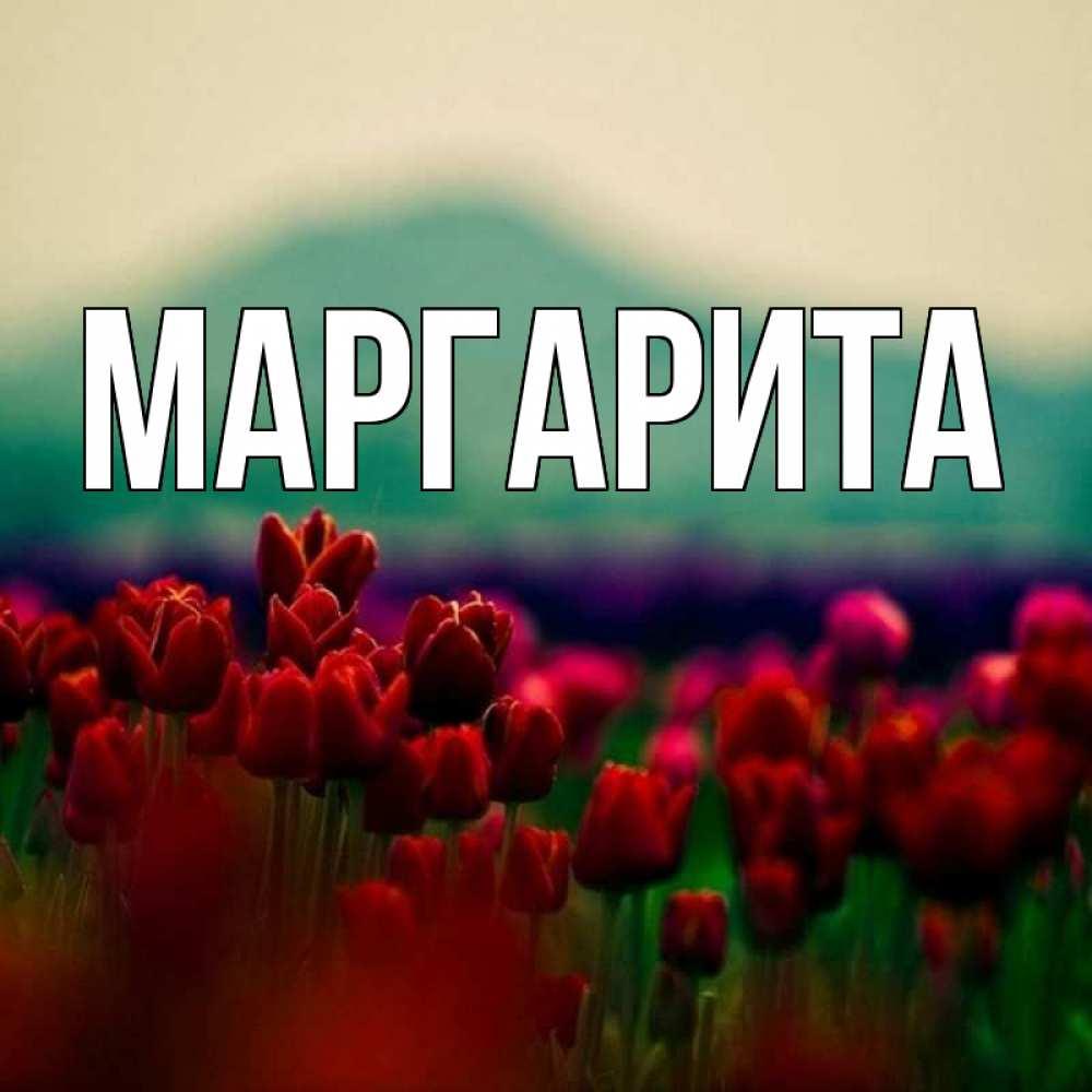 Поздравления, имя маргарита открытка