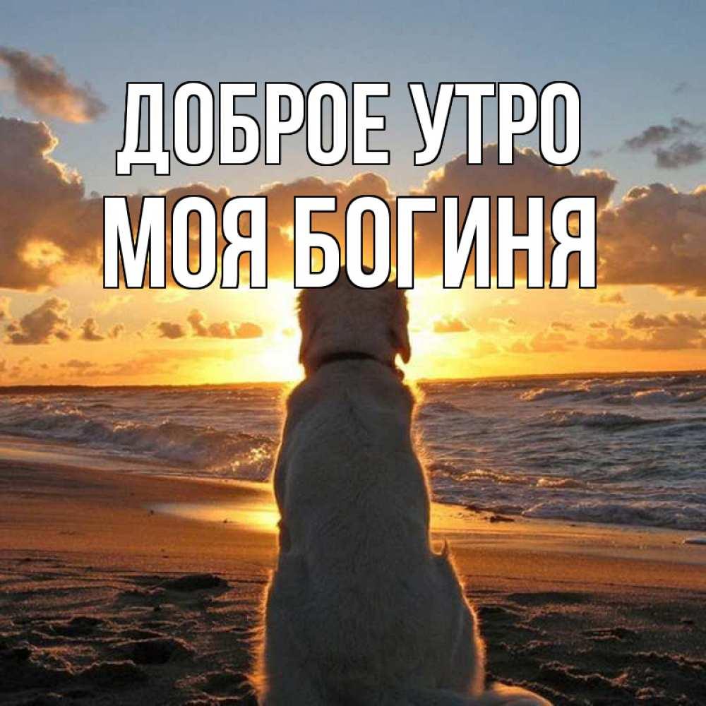 новосибирском открытки с добрым утром моя богиня два