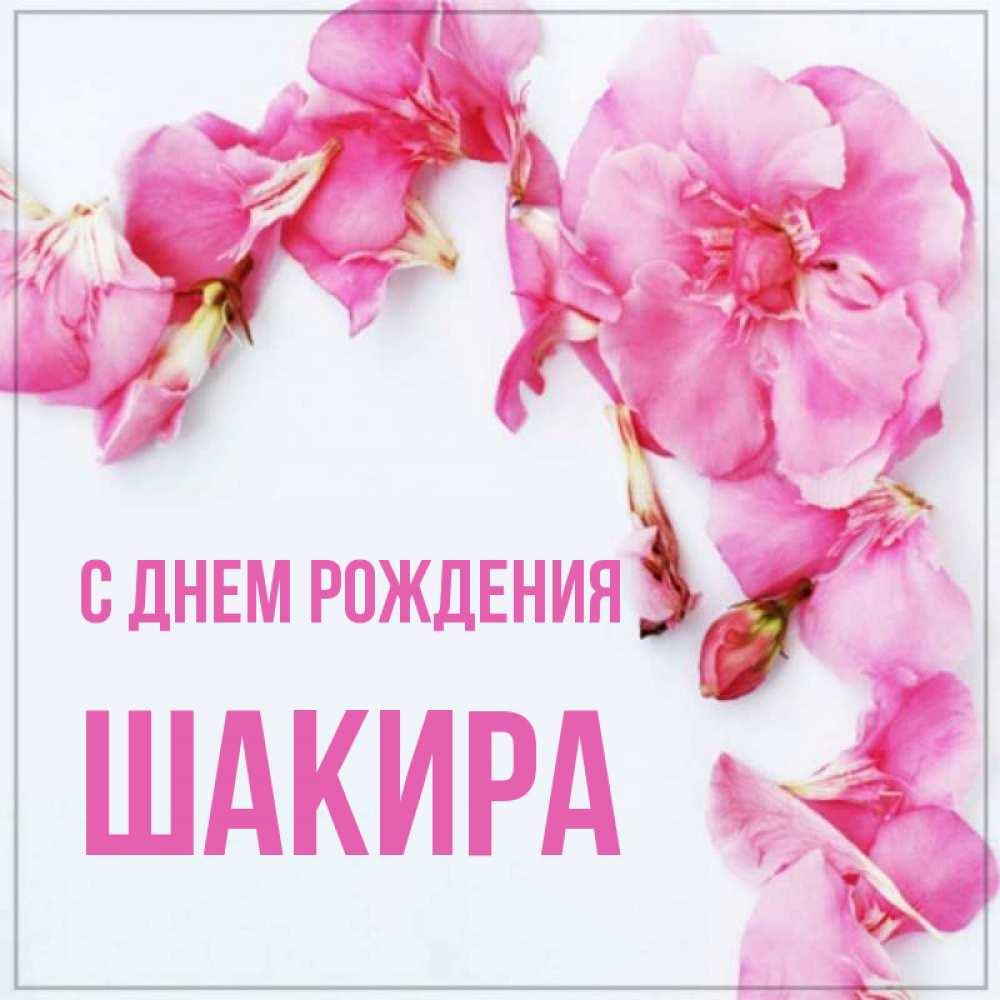 Открытка на каждый день с именем, Шакира С днем рождения Красивая открытка для поздравления с днем рождения Прикольная открытка с пожеланием онлайн скачать бесплатно