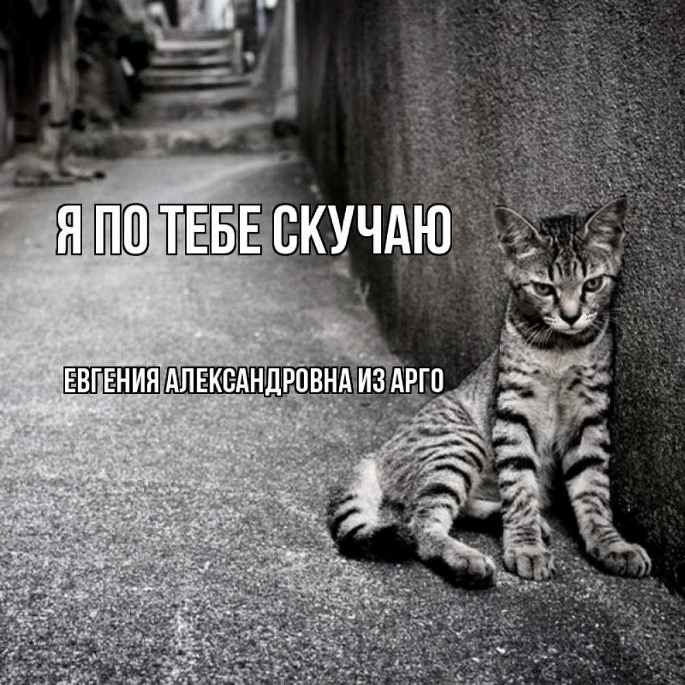 Открытка на каждый день с именем, Евгения-Александровна-из-Арго Я по тебе скучаю одиноко котику Прикольная открытка с пожеланием онлайн скачать бесплатно