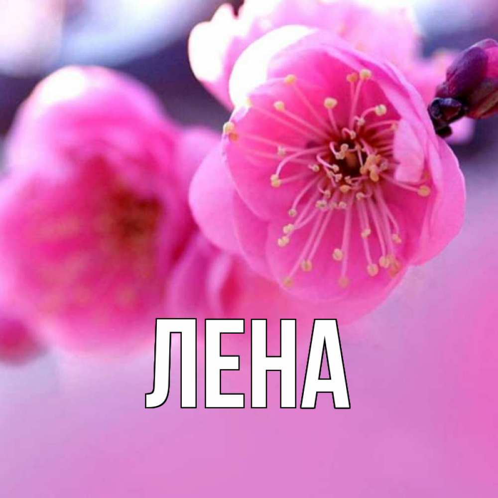 Цветы на день рождения картинки с именами лена, красивого