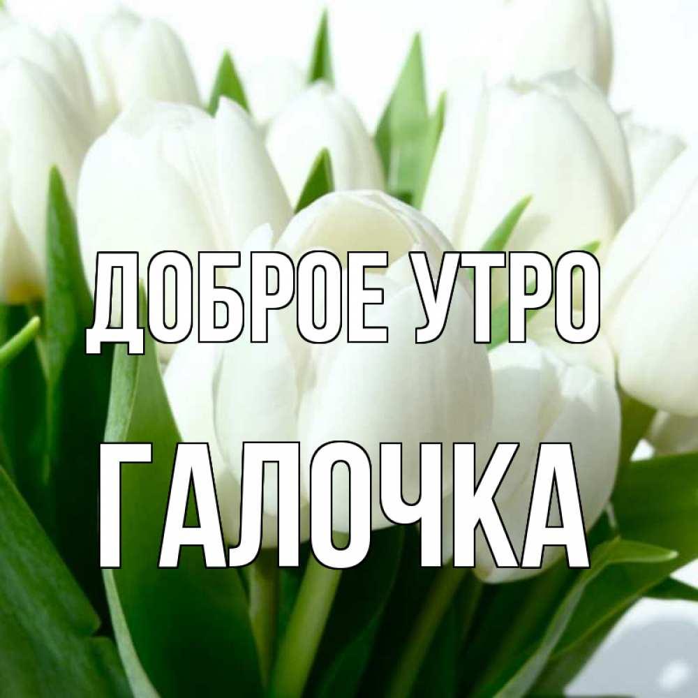 доброе утро галочка картинки красивые зелёный фото