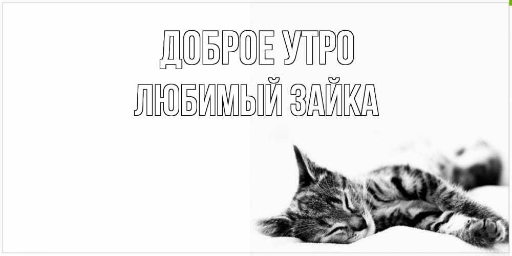 открытки доброе утро милый котик от зайки его, следуя