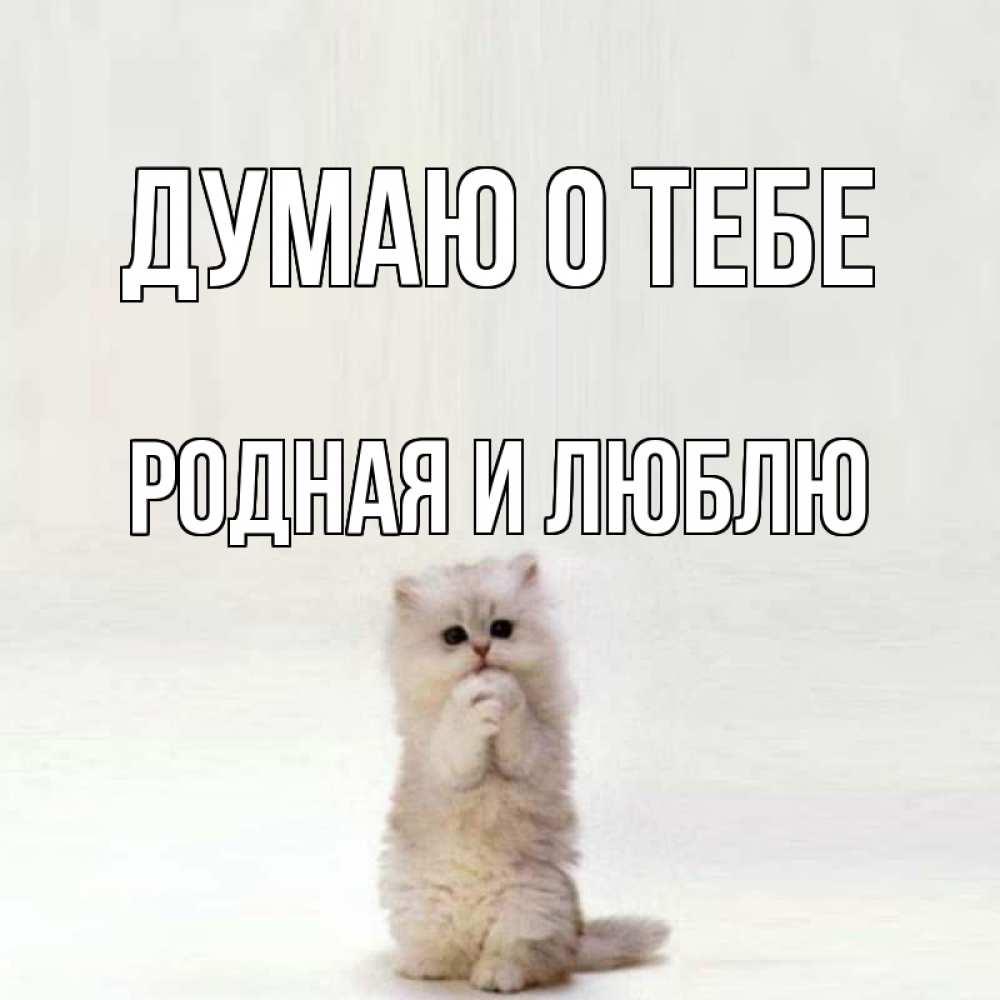 любом случае картинки люблю тебя мой родной котик нынешним властям совсем