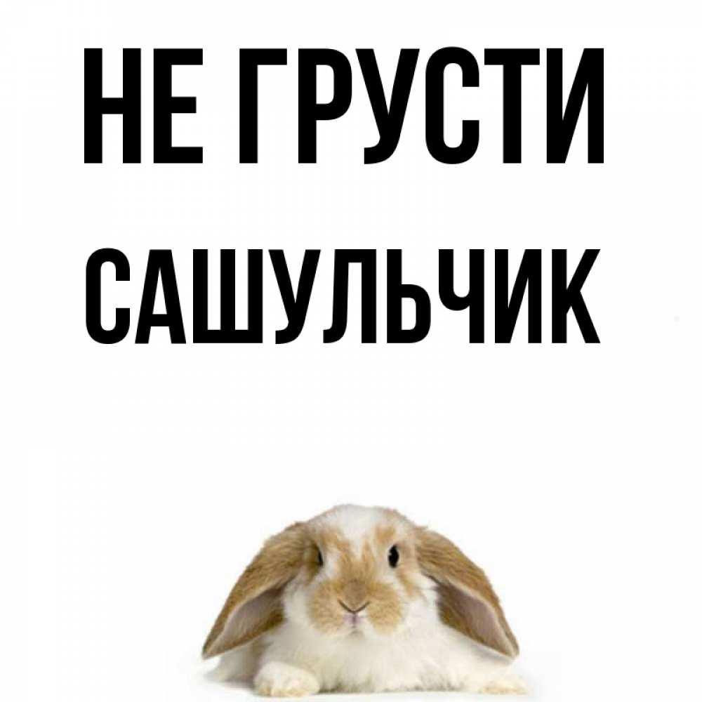 Картинки с надписью не грусти заяц