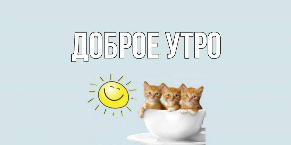 Открытка на каждый день с именем, выберите-имя Доброе утро котята Прикольная открытка с пожеланием онлайн скачать бесплатно