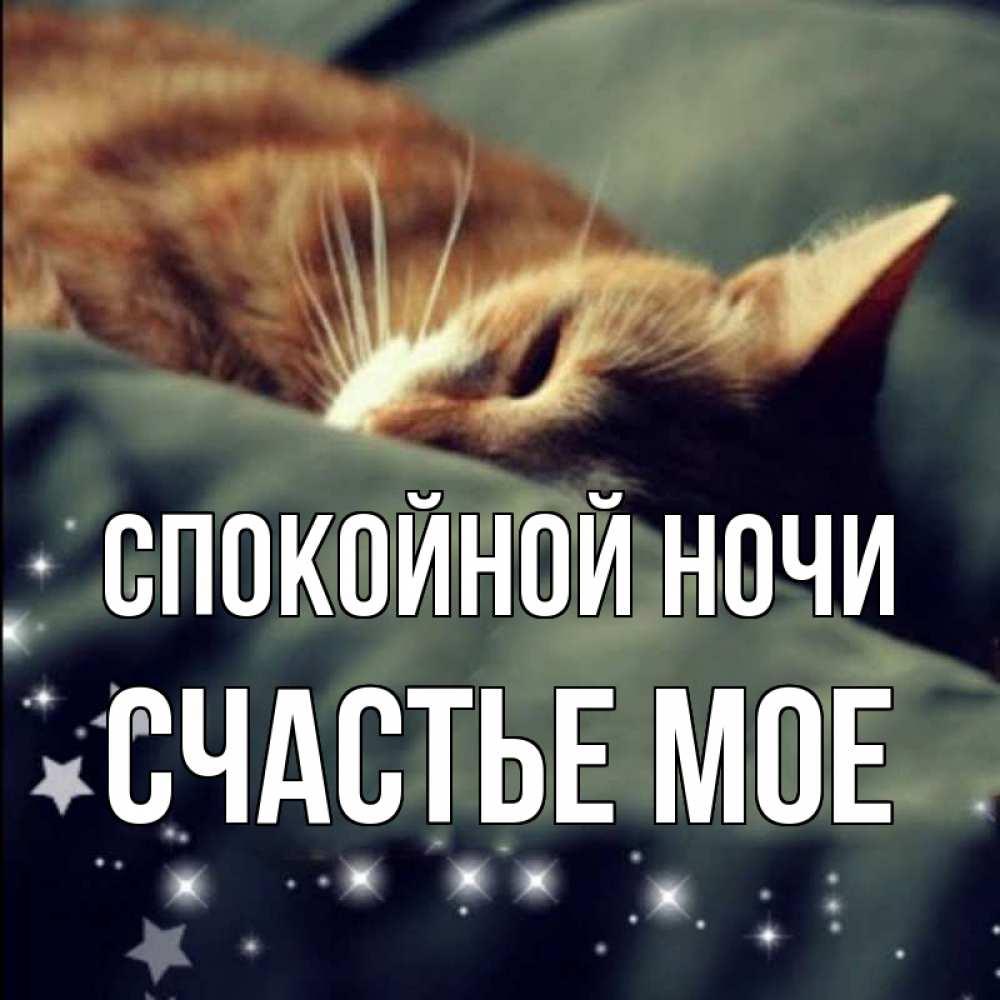 Открытка спокойной ночи папа с котами