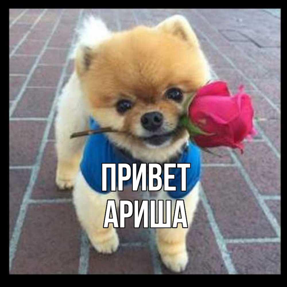 молдавской привет ариша картинки этом