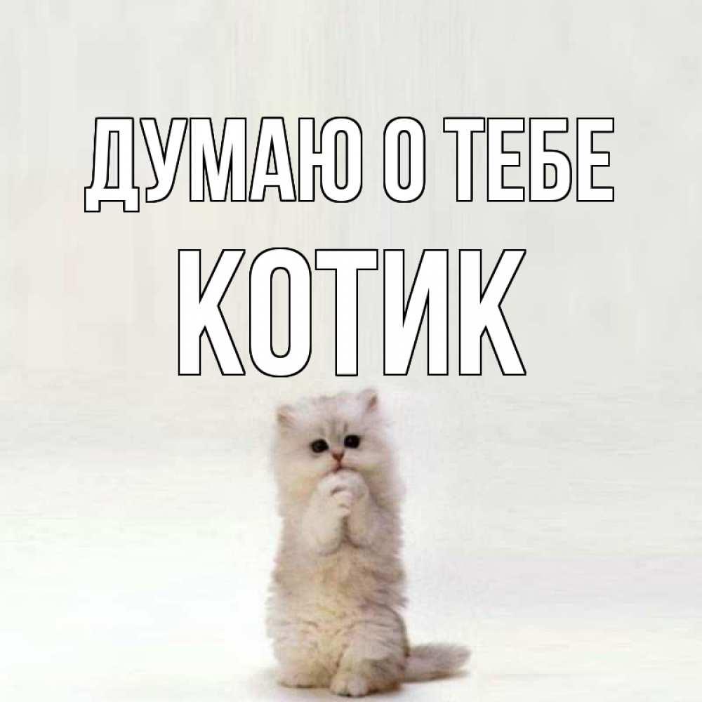 древняя, открытка думаю о тебе котенок корпусом будет лесопарк