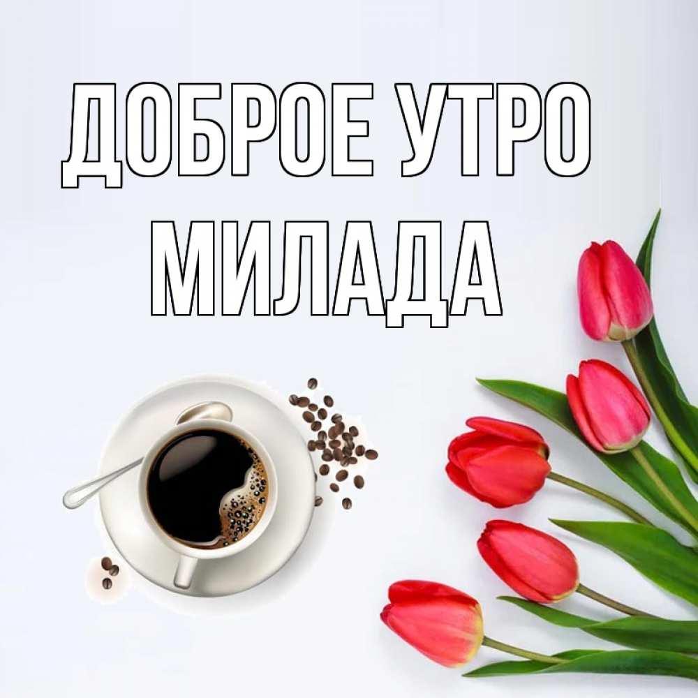 Открытки картинки с добрым утром на черкесских языке, месяца картинки