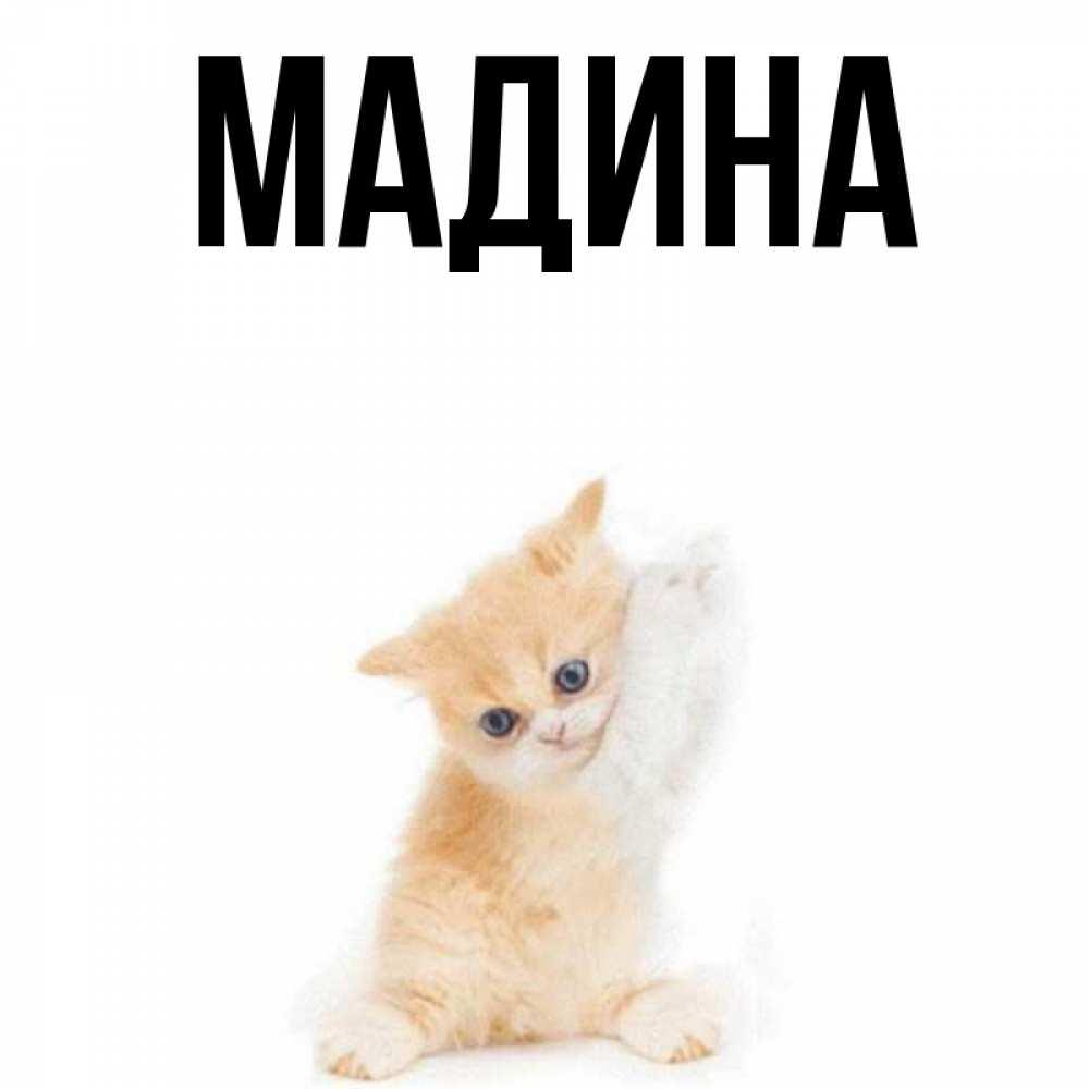 Имена открытка с именем мадина, прикол картинки