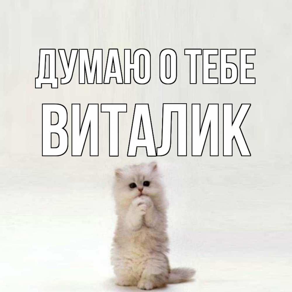 Открытка на каждый день с именем, Виталик Думаю о тебе кот стоит на задних лапах Прикольная открытка с пожеланием онлайн скачать бесплатно