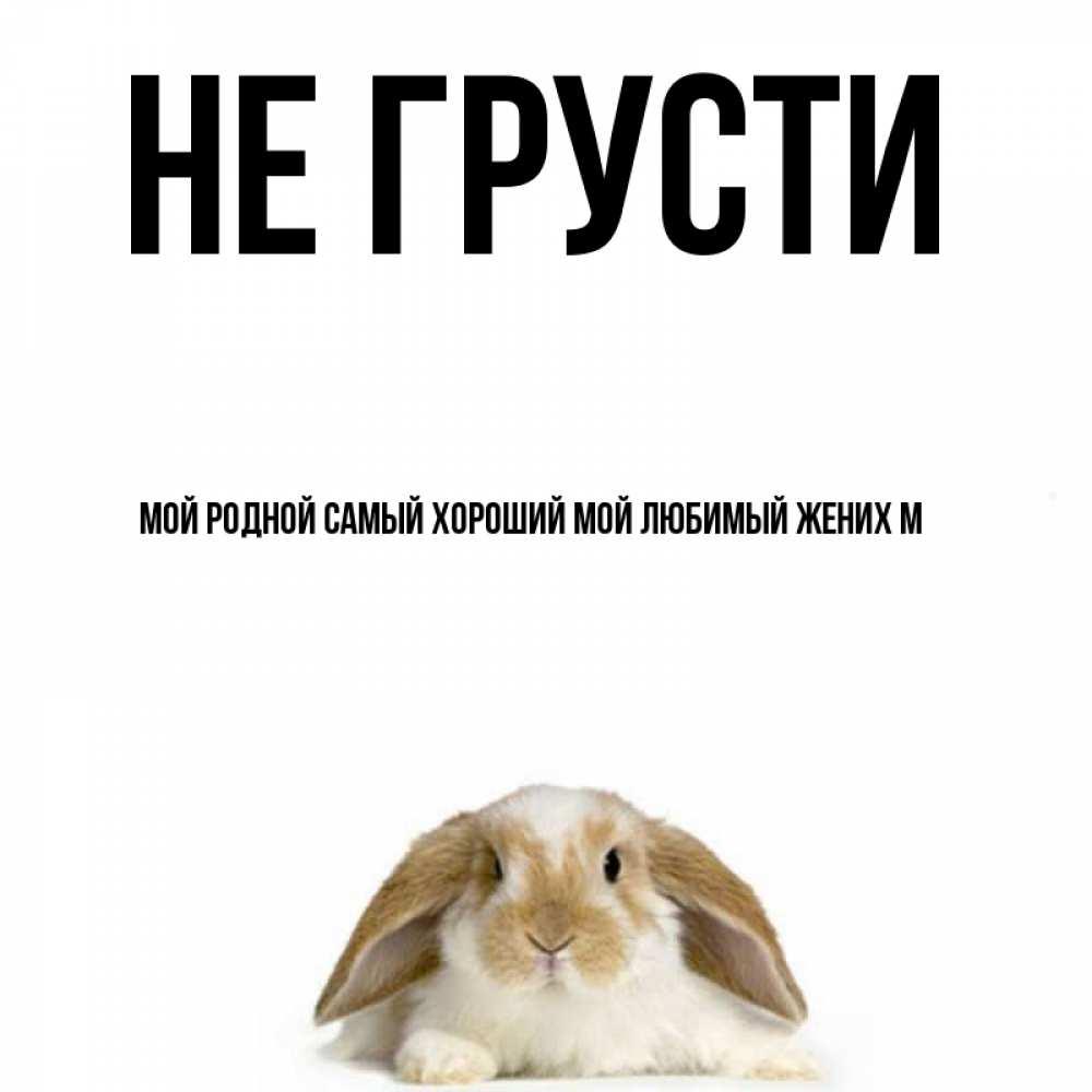 Открытка на каждый день с именем, Мой-родной-самый-хороший-мой-любимый-жених-М Не грусти коричнево белый заяц с большими ушками Прикольная открытка с пожеланием онлайн скачать бесплатно