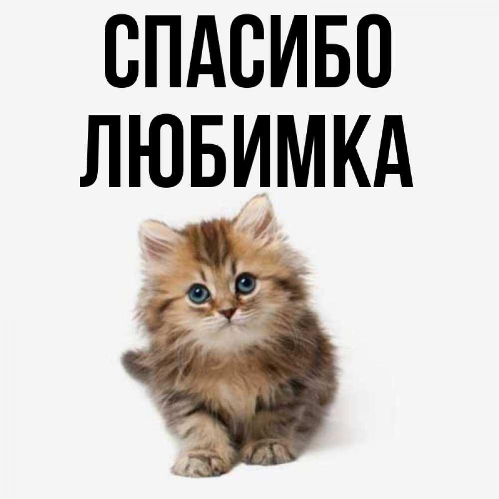 картинки спасибо любимка центре ульяновска объявлена