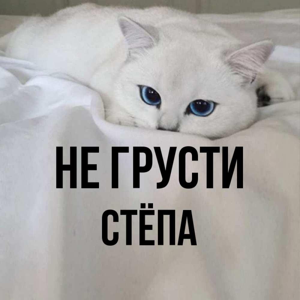 Открытка на каждый день с именем, Стёпа Не грусти Голубоглазая кошка Прикольная открытка с пожеланием онлайн скачать бесплатно