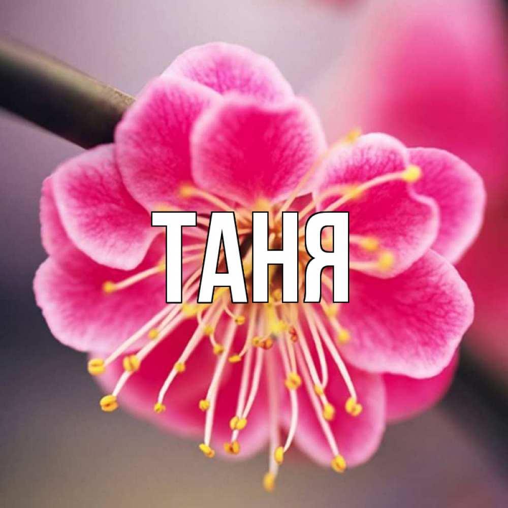 Открытка с именем таня