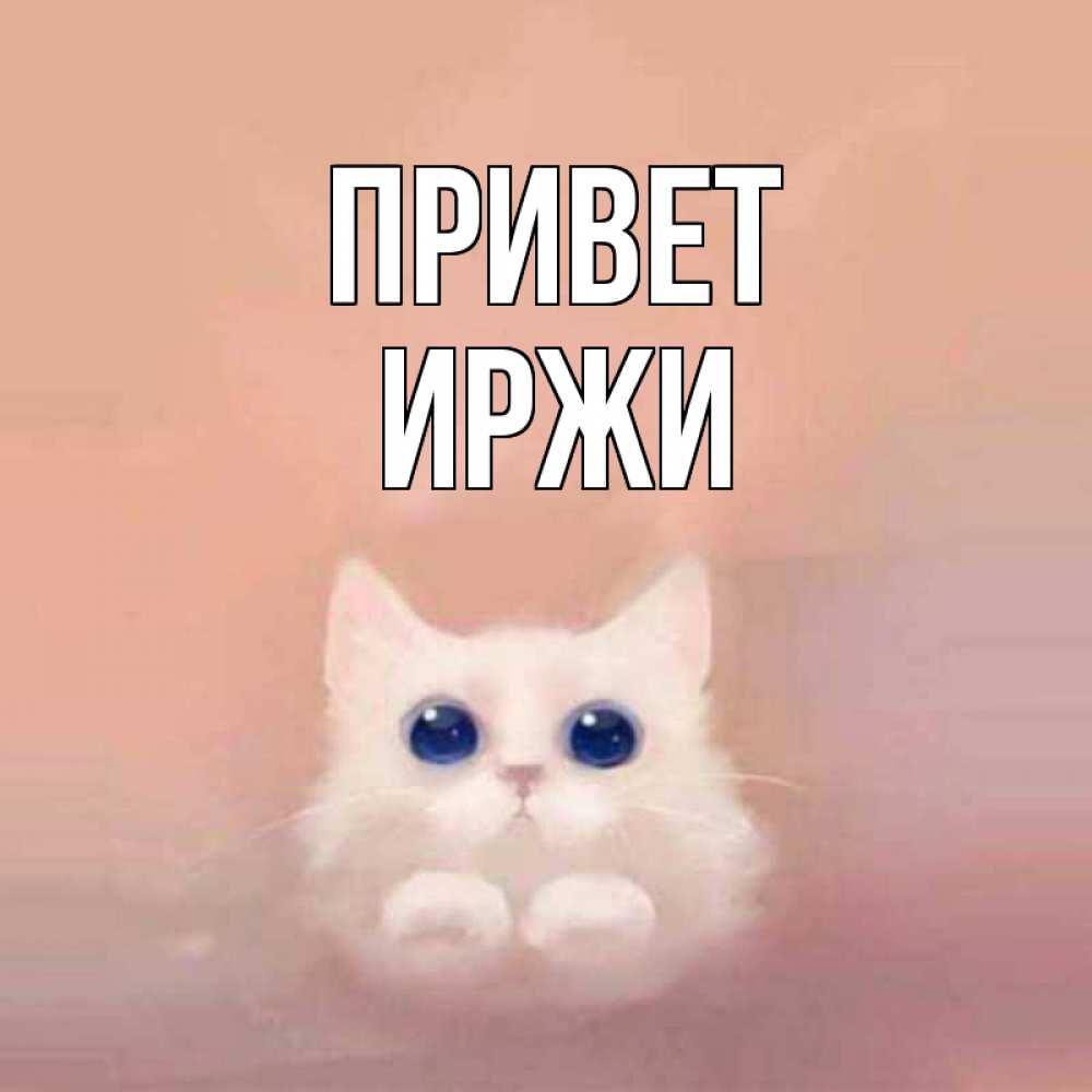 Открытка на каждый день с именем, Иржи Привет котик белый в полете Прикольная открытка с пожеланием онлайн скачать бесплатно