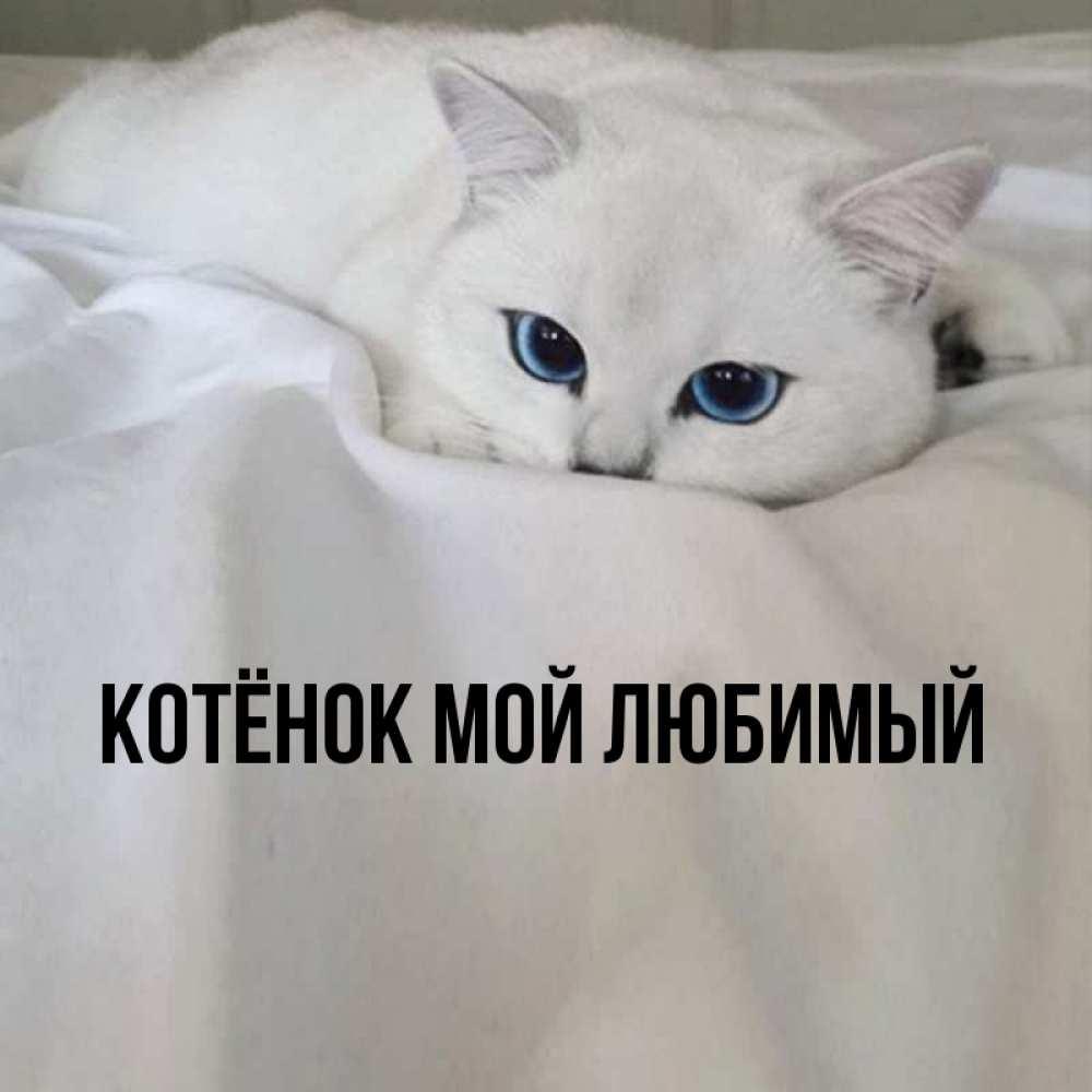 Открытка котенок мой любимый