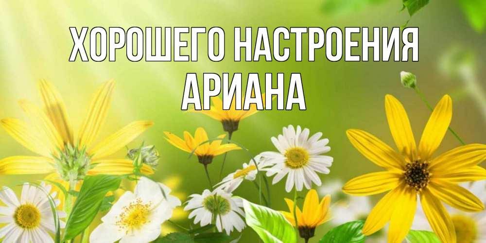 Открытка на каждый день с именем, Ариана Хорошего настроения цветы Прикольная открытка с пожеланием онлайн скачать бесплатно