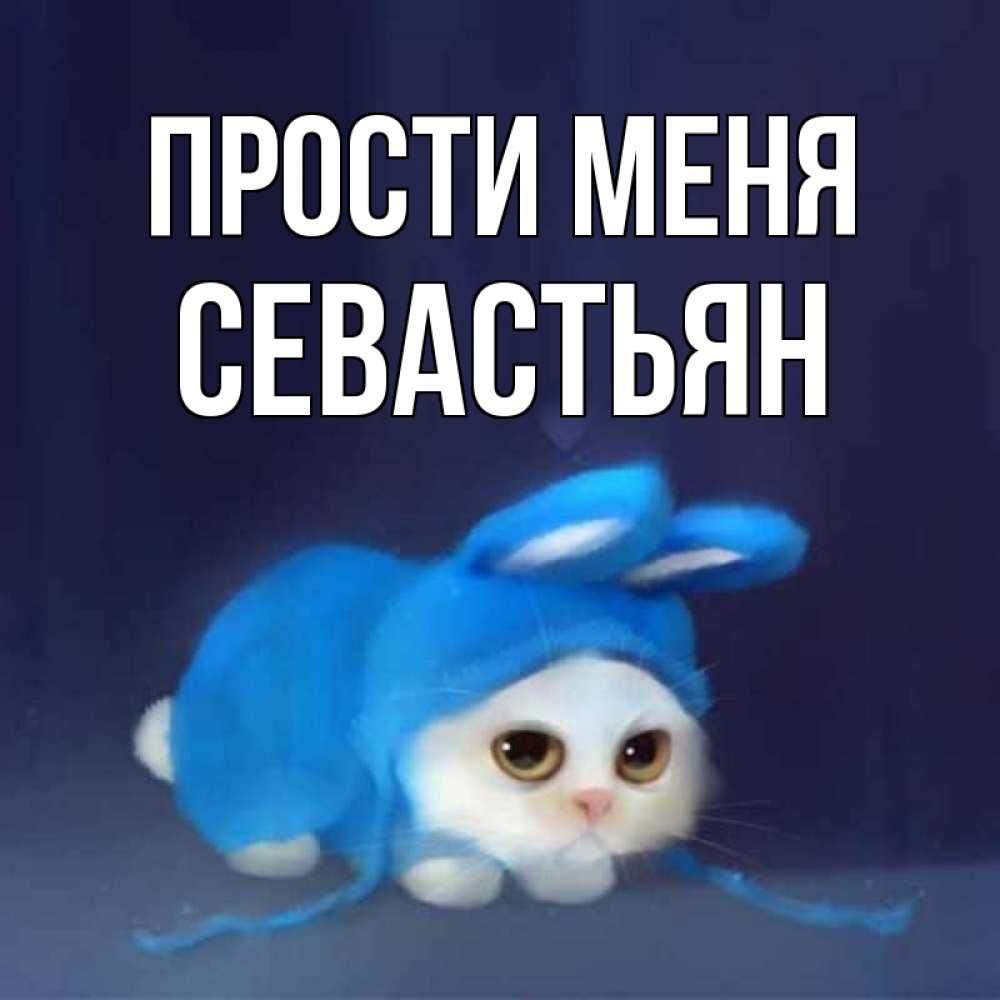 Открытка на каждый день с именем, Севастьян Прости меня невинный котозай просит прощения Прикольная открытка с пожеланием онлайн скачать бесплатно