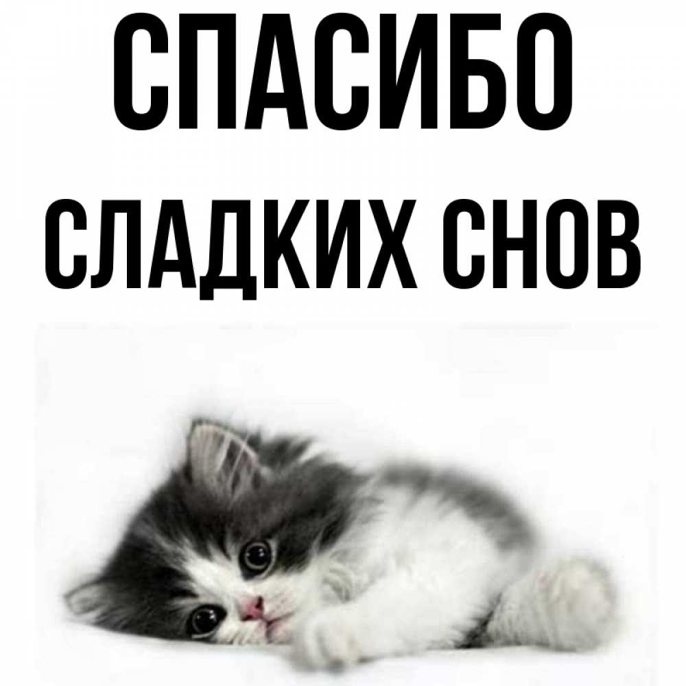 для картинки милый котик димуля сладких снов простейшем случае, можно