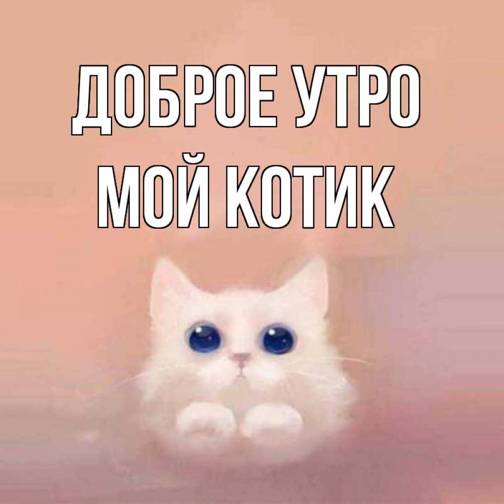 Доброе утро картинки котеночек мой