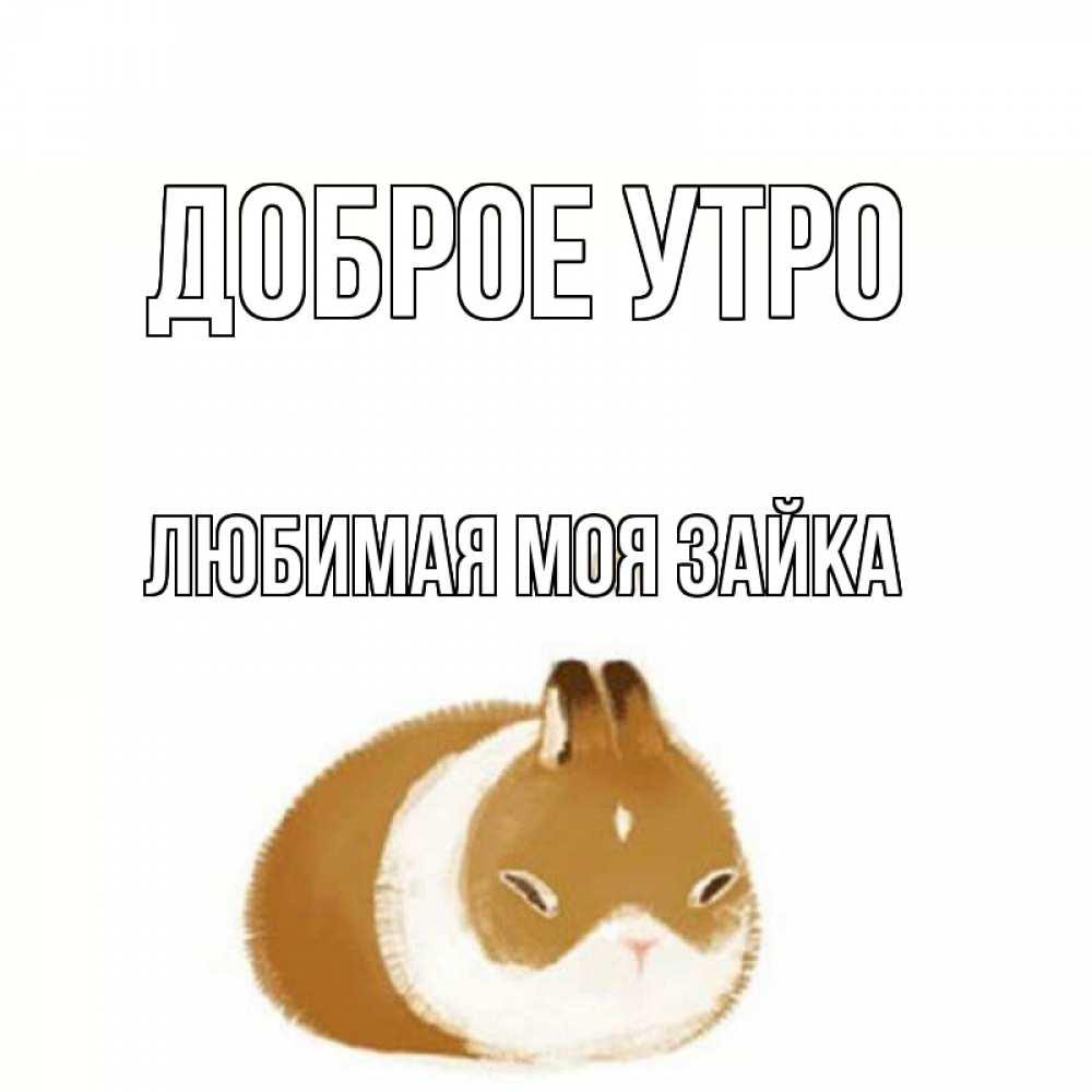 открытки доброе утро милый котик от зайки использование