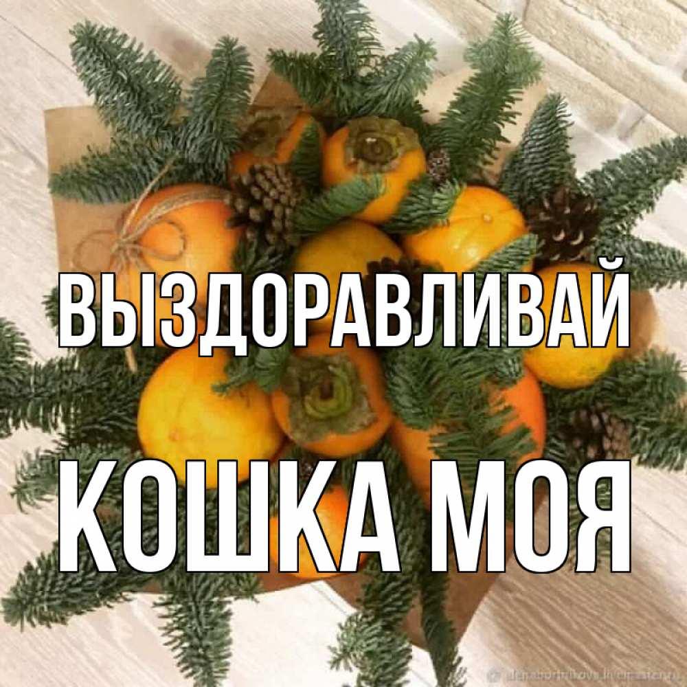 Картинки выздоравливай кошка с апельсинами