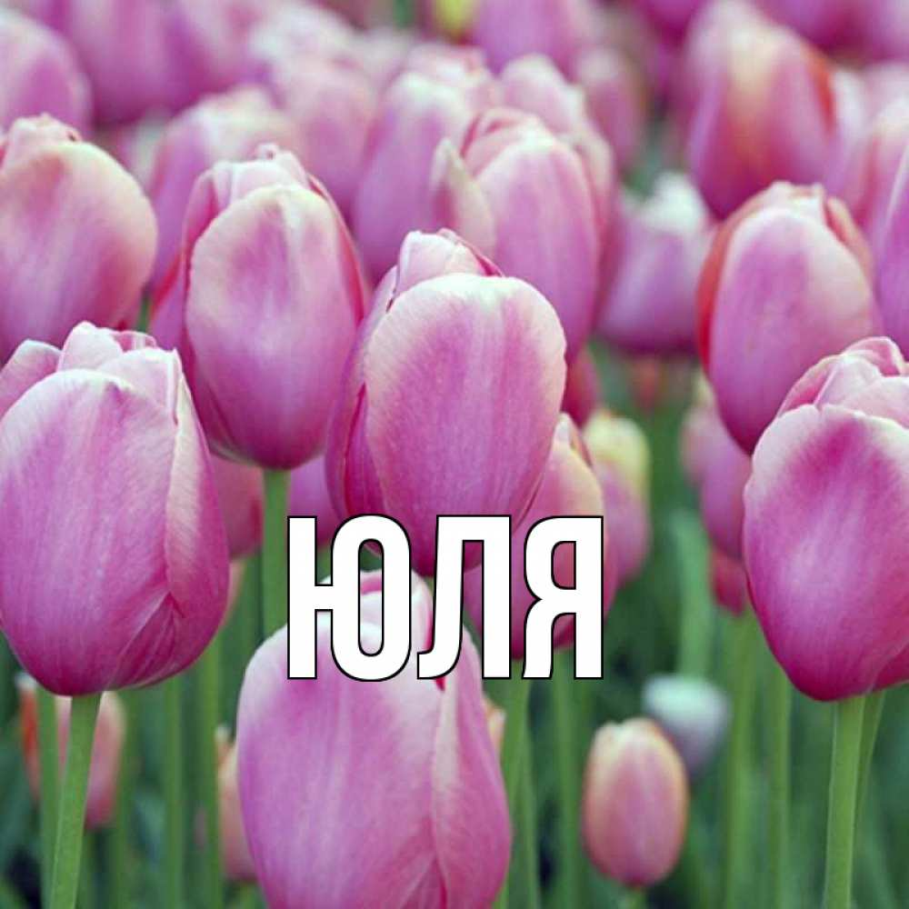Открытки на имя юля, декоратор открыток