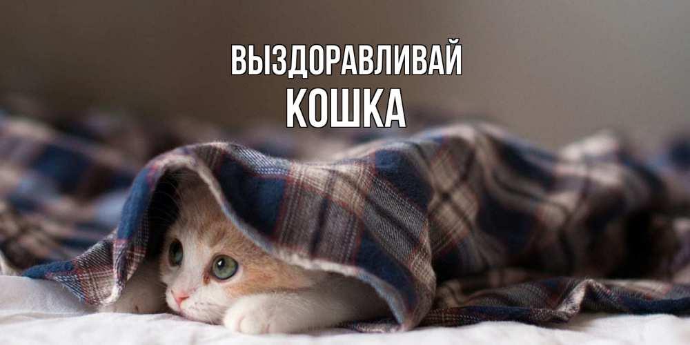 картинки выздоравливай кошка с апельсинами идеале