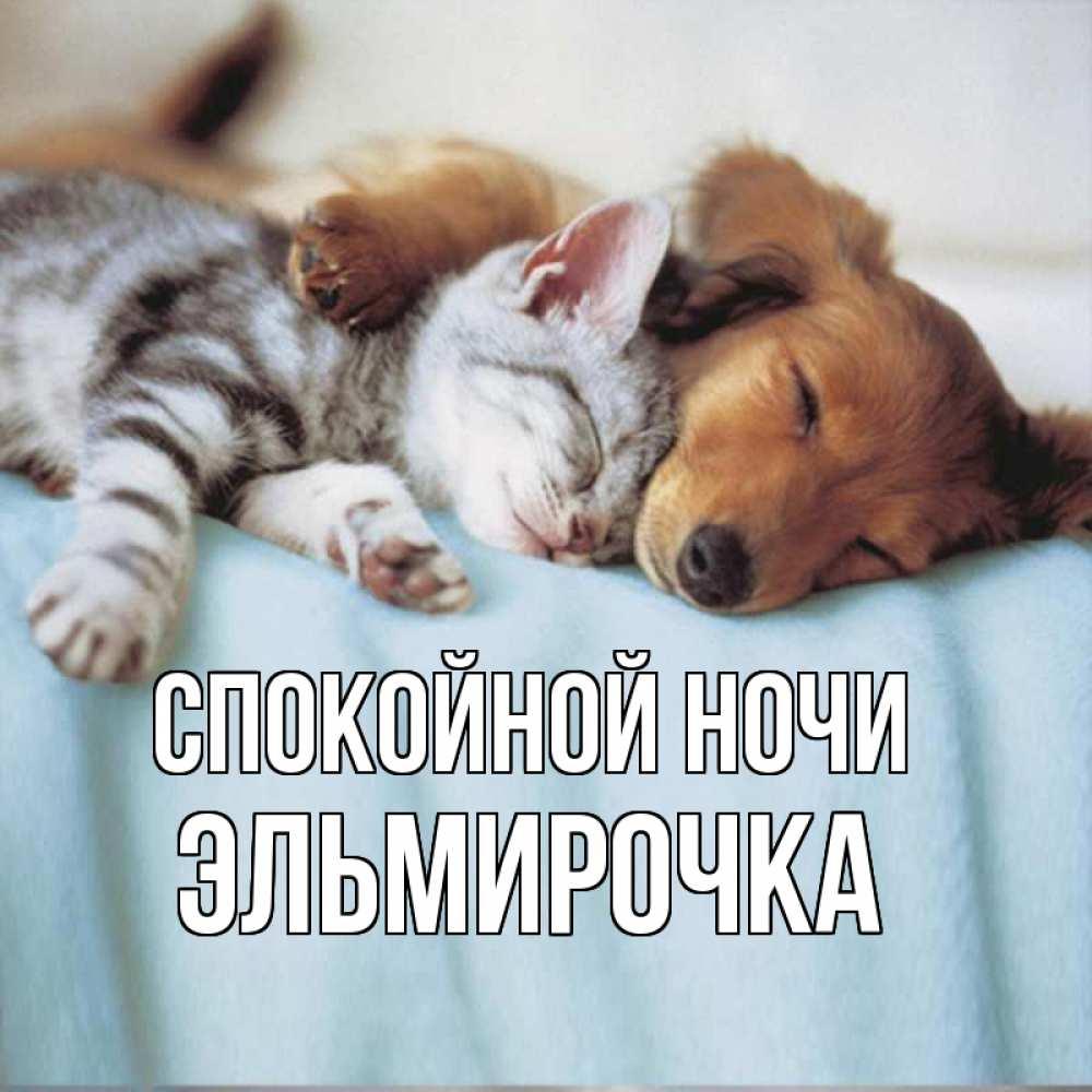 Кто дорог, картинки спокойной ночи с животными и надписями