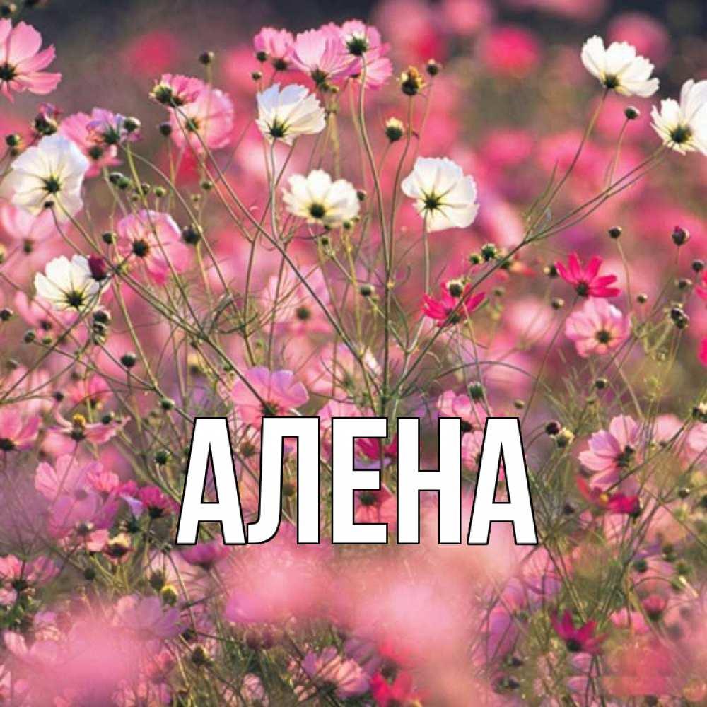 Картинки красивые с именами алена